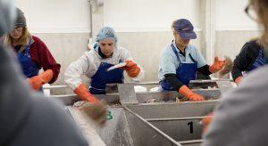 Bedrijfsreportage visserij
