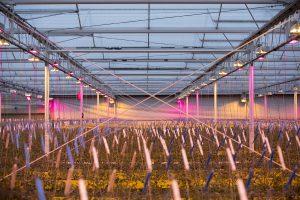 Productreportage glastuinbouw